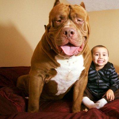Der Größte Hund Der Welt Ist Papa Geworden