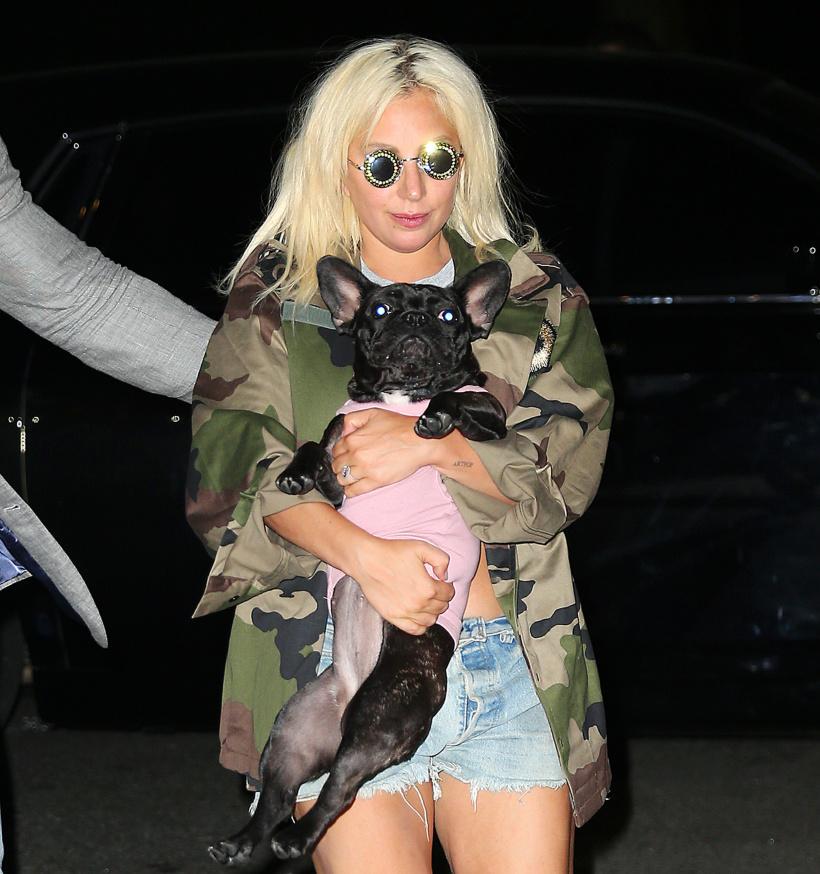 -Lady-Gaga-french-bulldog.jpg