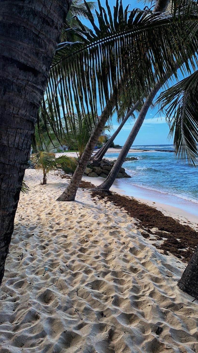 Traumhaftes Büro oder? Barbados lockt mit Karibik-Flair