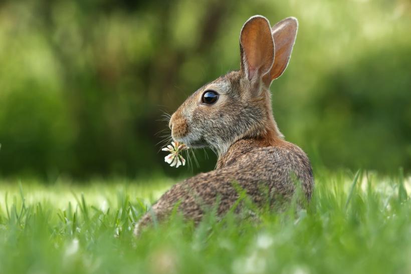 Wusstest Du, dass Hasen Eier legen können?