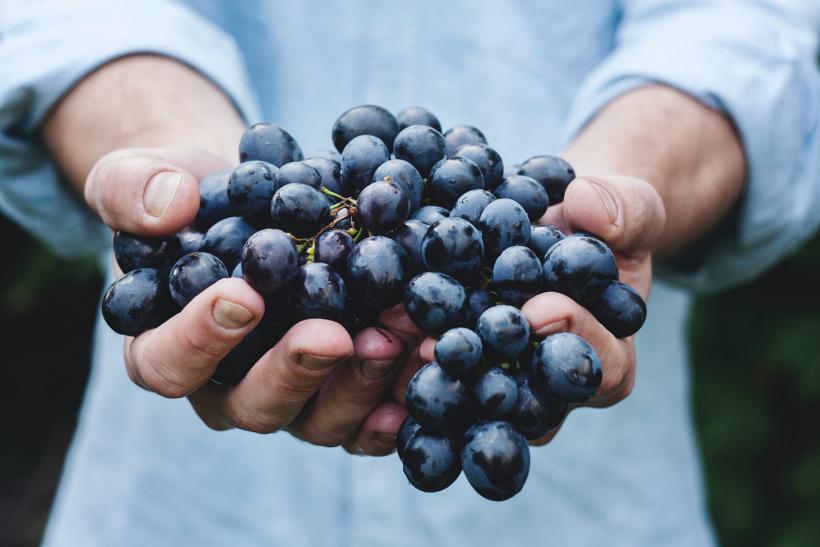 In Deutschland gibt es etliche Weinbaugebiete