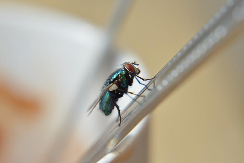 Fliege auf Strohhalm