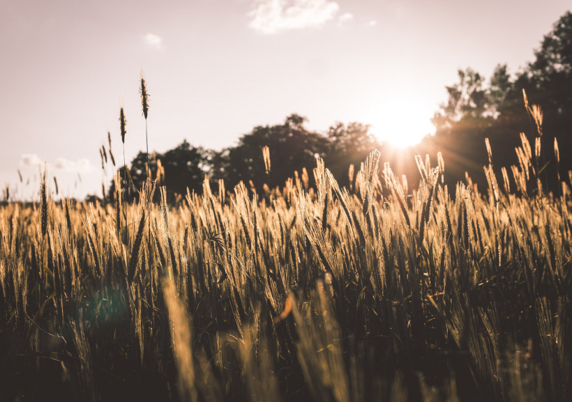 Feld mit Sonnenuntergang